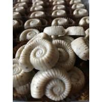 Cappuccino Coffee Chocolate Ammonites