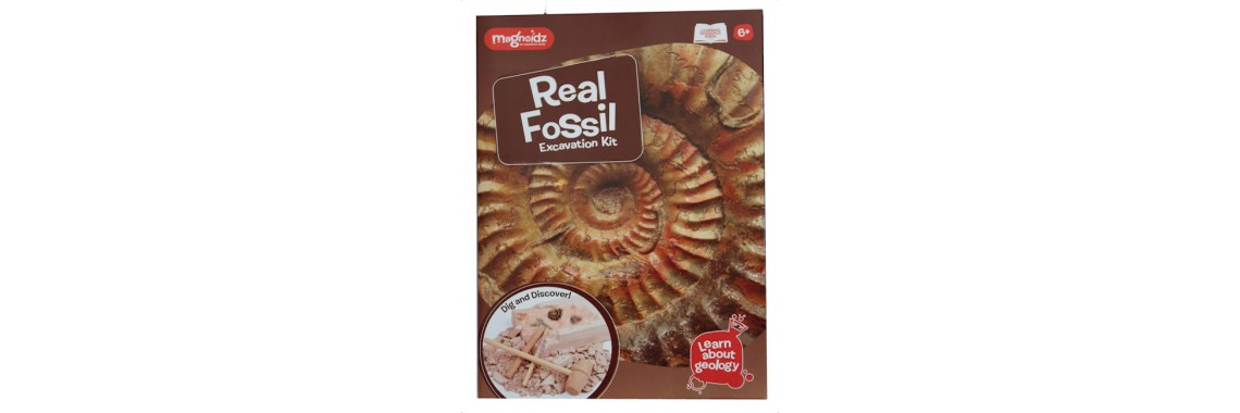 Fossil Kit