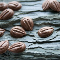 Milk Chocolate Trilobite Buttons