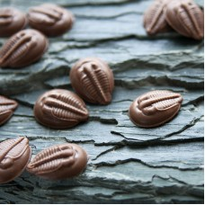 Milk Chocolate Trilobite Buttons