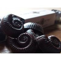 Dark Chocolate Ginger Ammonites