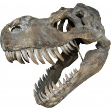 Giant T-Rex Wall Mounted Skull 51.5cm