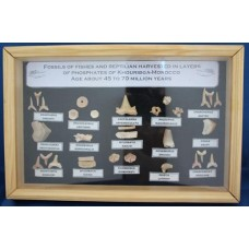 Framed Fossil Tooth Collection