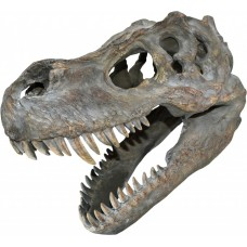 T-Rex Wall Mounted Skull 39.5cm